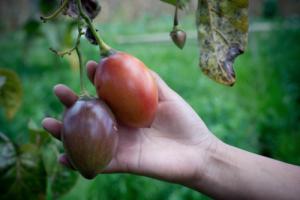 http://cultivons-la-biodiversite.org/app/uploads/sites/4/2017/11/av5-300x200.png