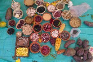 https://cultivons-la-biodiversite.org/app/uploads/sites/4/2017/12/Equateur-Agroécologie-et-marchés-locaux-dans-les-Andes-2016-©Eduardo-Naranjo-3-300x200.jpg